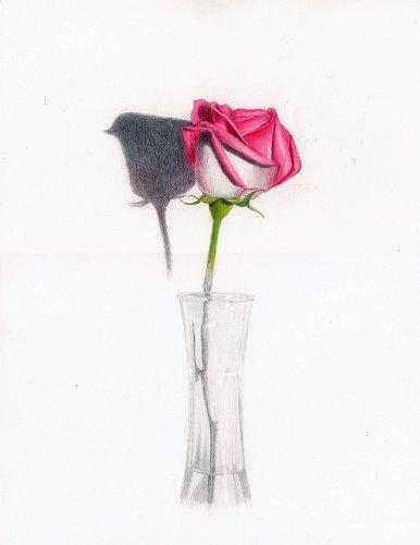 RoseForKerima_386x500